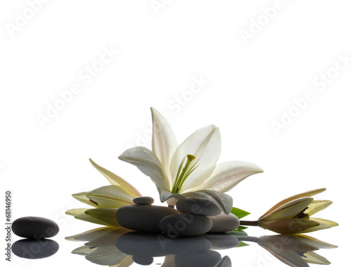 Fototapeta composition with lily and stones