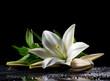 Постер, плакат: white freshness lily
