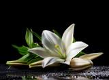 Fotoroleta white freshness lily
