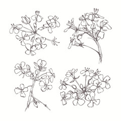Set of monochrome flowers isolated on white background. Hand dra