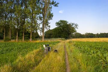 Rural scene - bike parked between fields