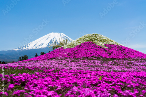 富士芝桜まつり - 68149918