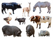 farm animals. Isolated over white background