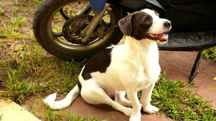 Cute Dog Sitting Outdoors near Bike.