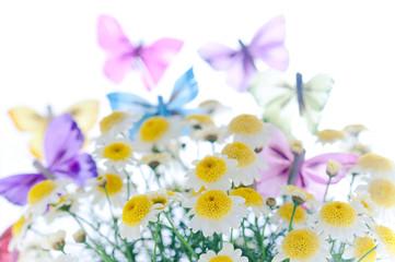 マーガレット 蝶々 春イメージ