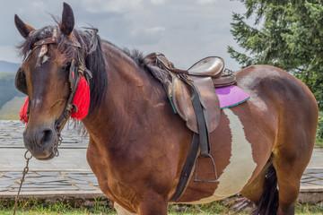 saddled horse ready for riding