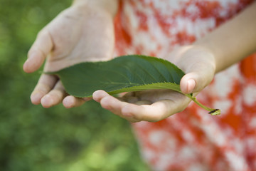 Leaf on the hand