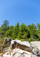 Evergreens Over Boulders Under Blue Sky