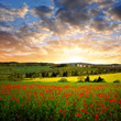 Spring landscape with red poppy field in the sunset