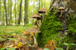 many mushroom in autumn forest - 68155737