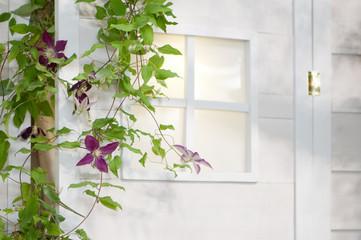 クレマチス 白い家 玄関