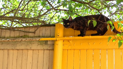black cat on a wall outdoors