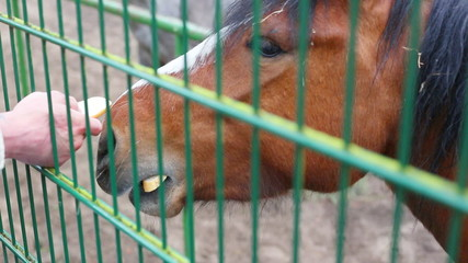 horse behind a fence at the zoo