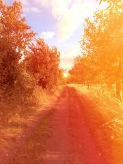 Wanderweg im Licht
