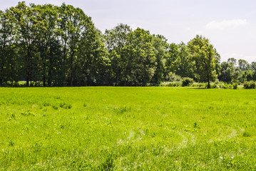 Lawn during summer