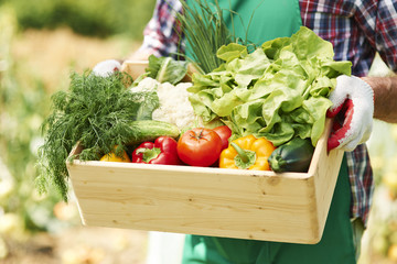 Close up of box with vegetables in hands of mature man