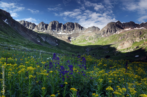 Wildflowers at American Basin in the Colorado Rockies