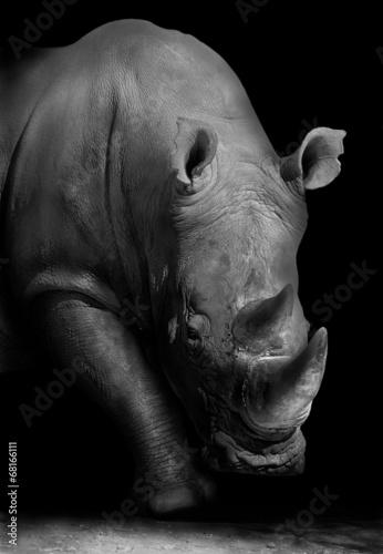In de dag Neushoorn Rhino in Black and White