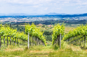 Typical Tuscany landscape with vineyards,Italy