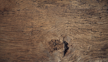 beautiful close up textured of bark wood use as multipurpose nat