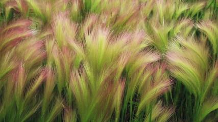 Lush wild grass