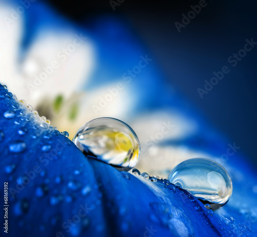 flower petal with drops © Vera Kuttelvaserova