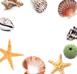 Seesterne, Muscheln und Schnecken
