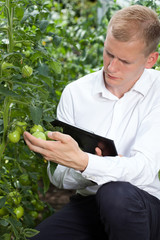 Expert controlling tomatoes condition