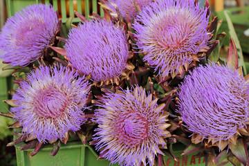 purple flowers of artichoke on daily market in Florence