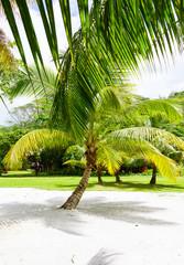 Palm tree on a tropical