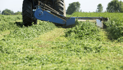 Mowing clover field with rotary cutter