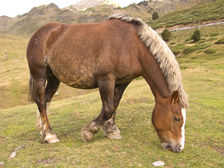 Brown horse in mountains
