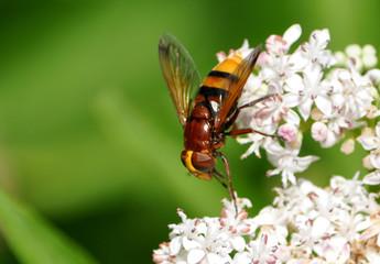 Bee on Flower blooming