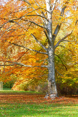 autumn park with tree