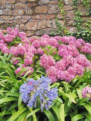 fleurs typiques de Brehat