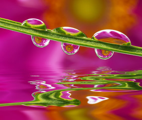 flower mirroring in rain drops - macro