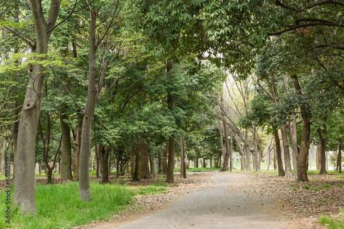 canvas print picture Park scenic