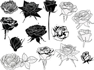 isolated fourteen black and white roses sketches