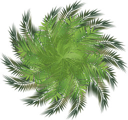 circle palm leaves isolated on white