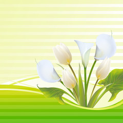 White tulip spring flowers bouquet for sale.  illustration.