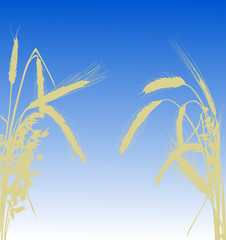wheat half frame silhouette on blue background