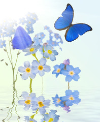 blue  forget-me-not flowers and two butterflies with reflection