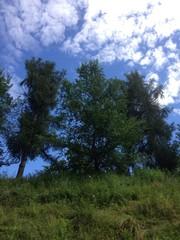 alberi sulla collina
