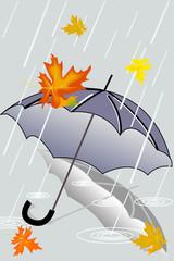 autumn rain and forgotten umbrella