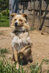 Dog holding front leg up