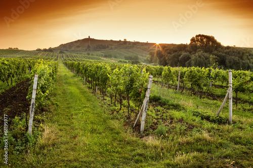 Sunrise over a vineyard © Rostislav Sedlacek