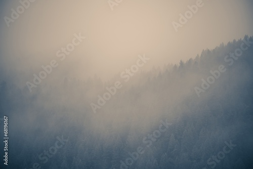 Misty Forest Background