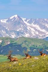 Summer Meadow with Elks