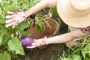 Donna che lavora nell'orto e raccoglie verdure