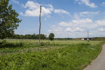 Farmland and power pole